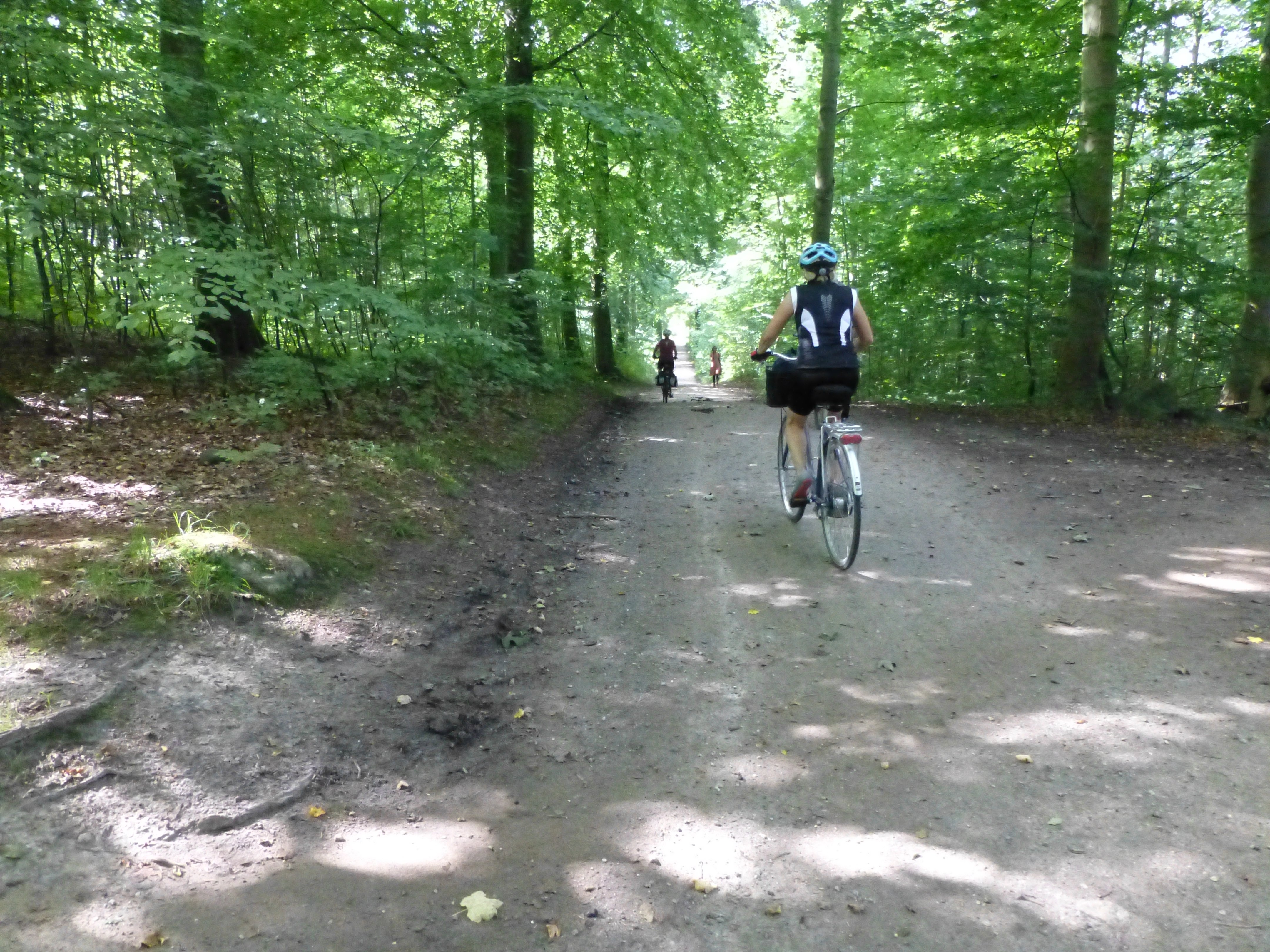Family cycling holidays island of Møn. Ride forest trails.