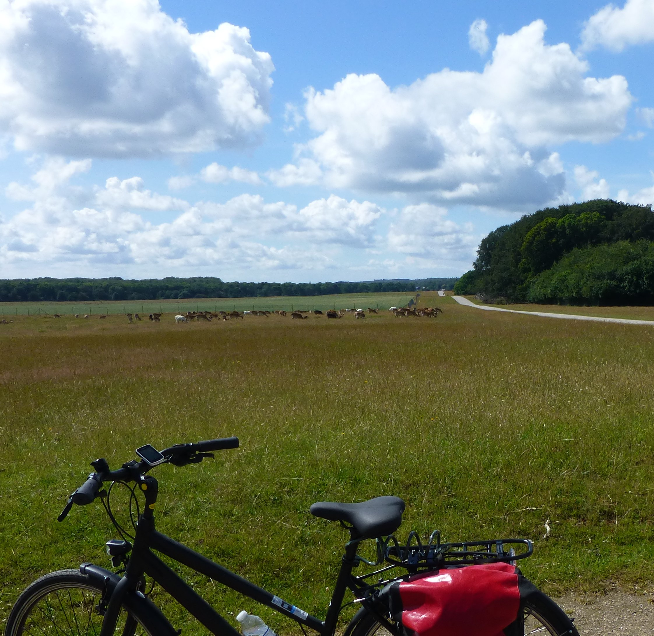 Enjoy the herds of deer on your Kings Trail bike holiday